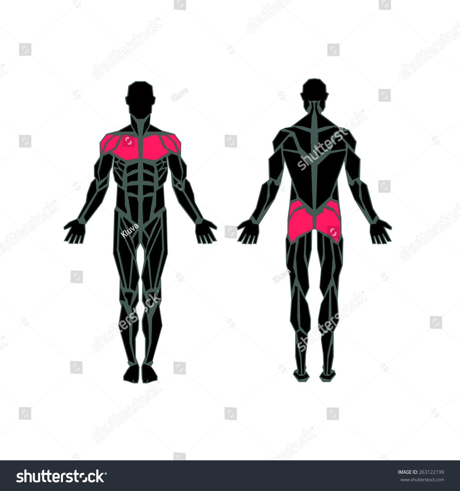 Polygonal Anatomy Male Muscular System Exercise Stock
