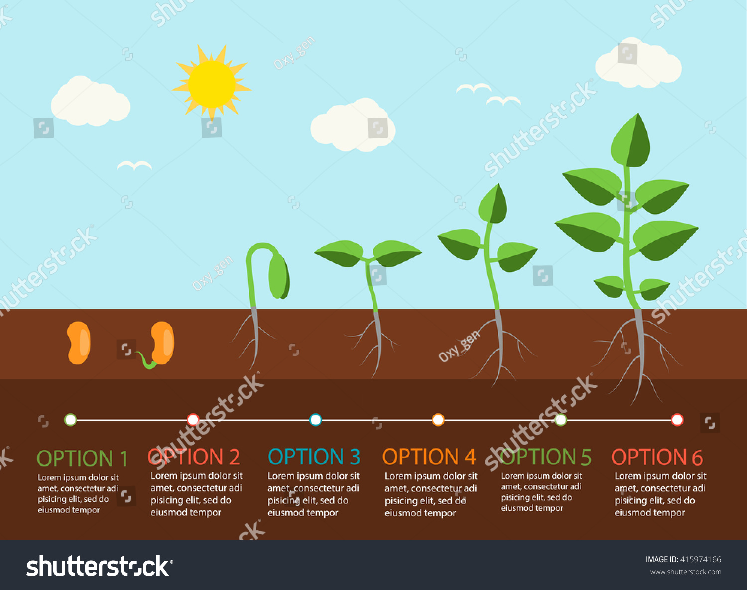 Seedlings Growing Infographics Plants Grow Stages Stock