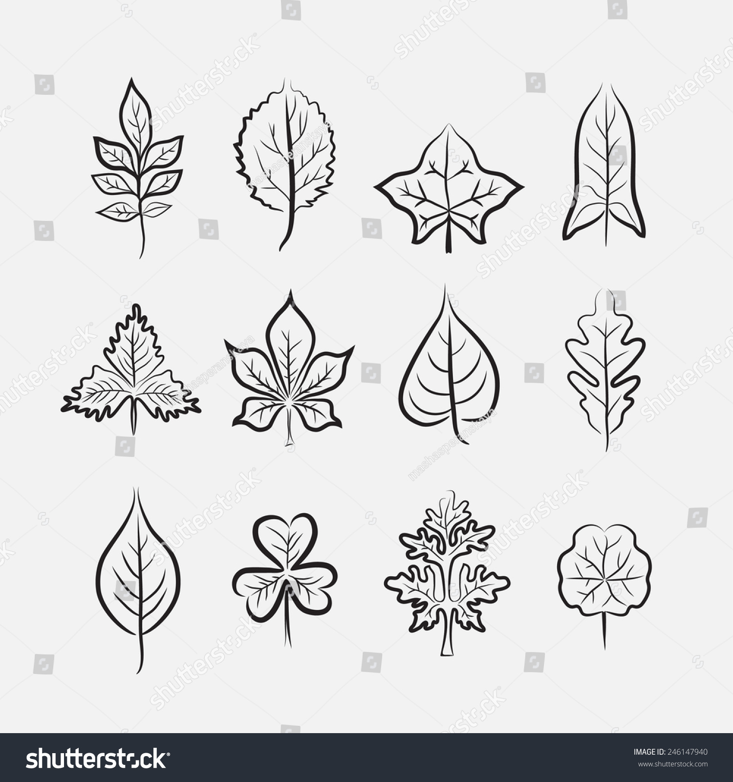 Set Twelve Different Types Leaves On Stock Vector