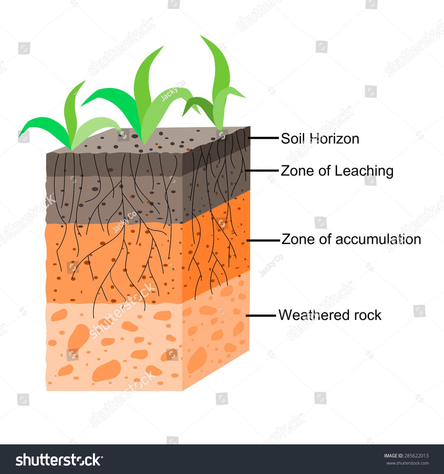 Soil Formation Soil Horizons Stock Vector
