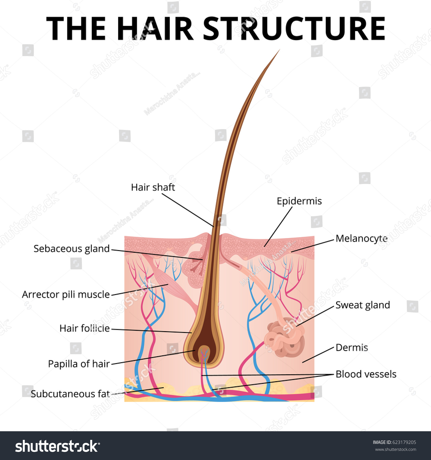 Structure Hair Illustration Structure Hair Hair Stock Vector