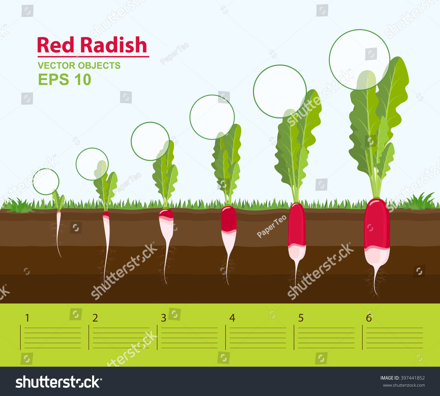 Vector Illustration Phases Stage Growth Development Stock