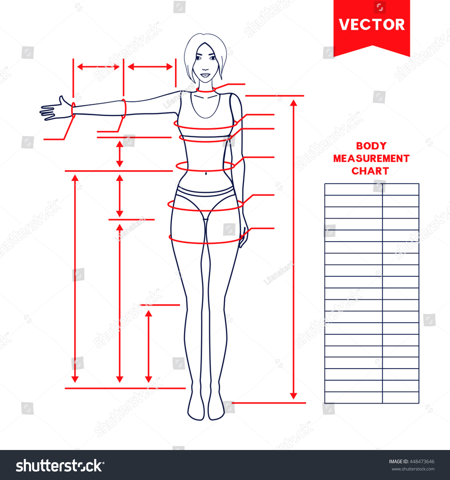 Woman Body Measurement Chart Scheme For Measurement Human