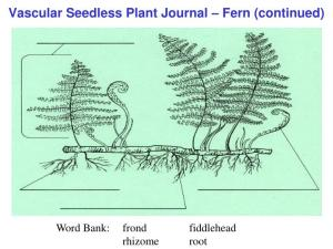 PPT  Plant Cell Journal  Elodea PowerPoint Presentation  ID:1159196