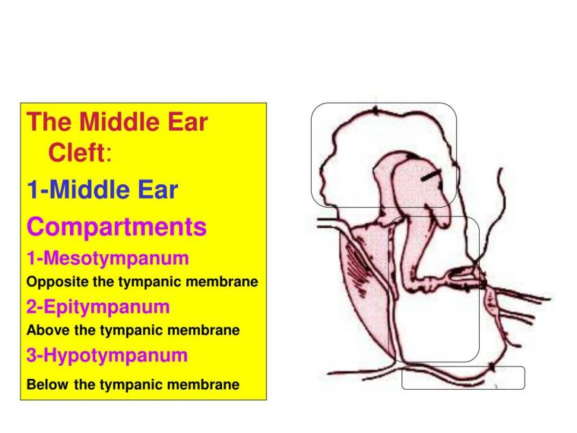 PPT - Anatomy of The Ear PowerPoint Presentation, free ...