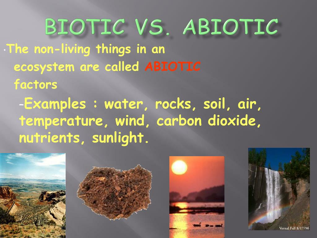 10 Things Ecosystem Biotic