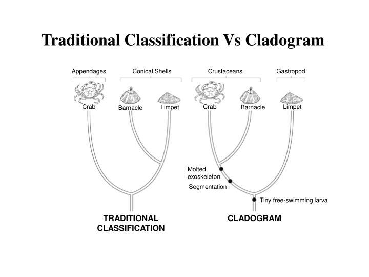 Section 18 2 Modern Evolutionary Classification Worksheet
