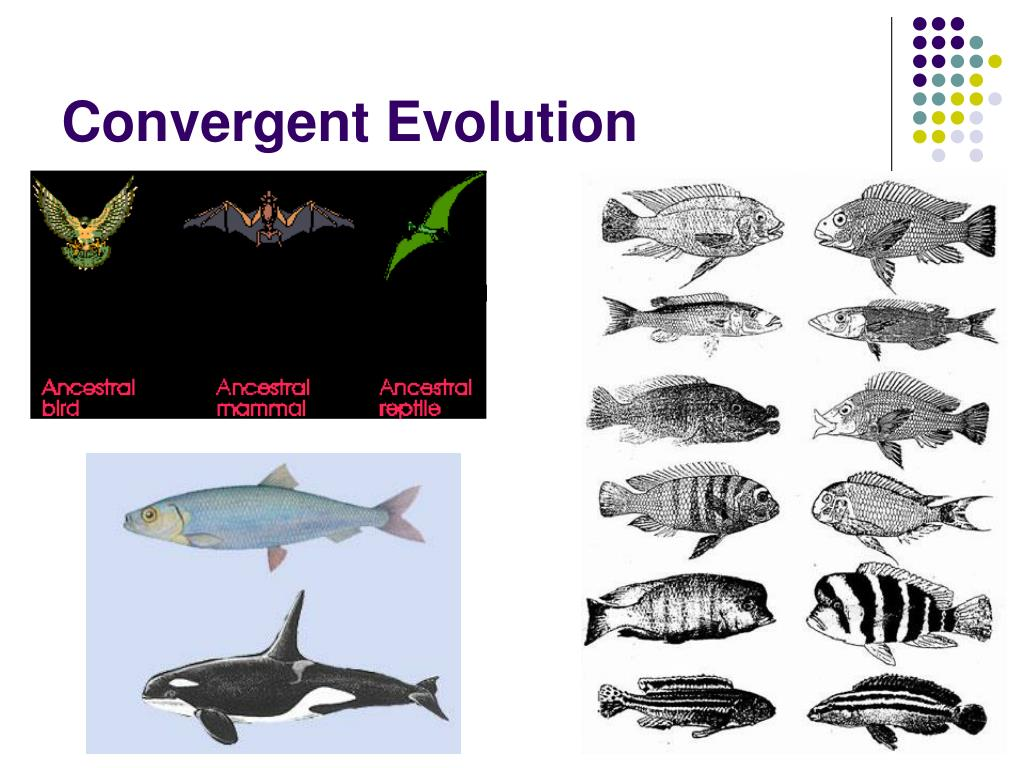 Evolution What Is Convergent Evolution