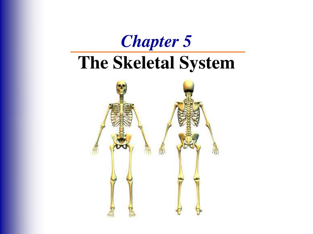 The Skeletal System Worksheet Answer Key