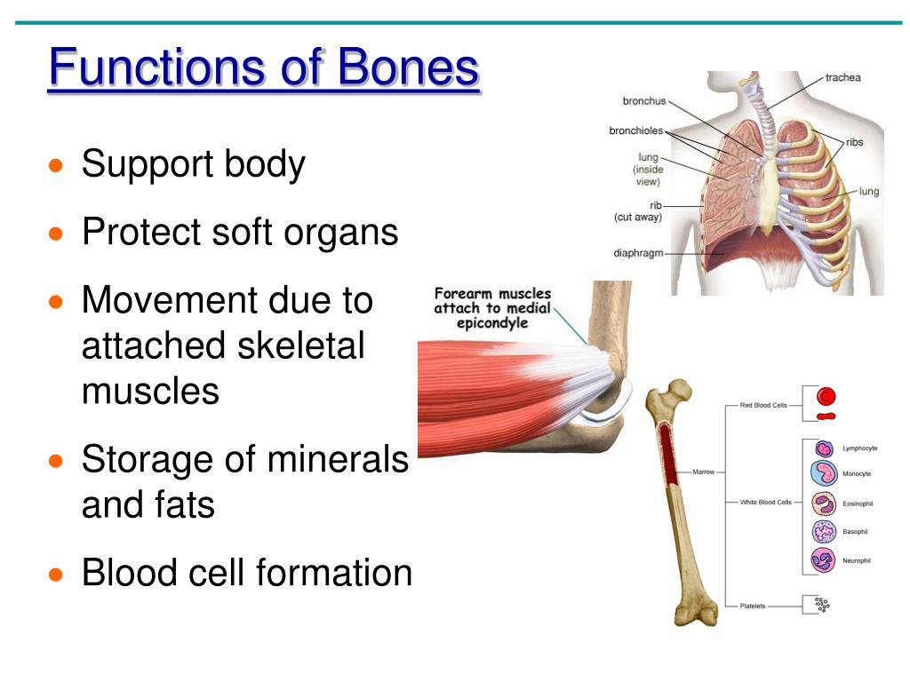 Anatomy And Physiology Coloring Workbook Chapter 5 Bone