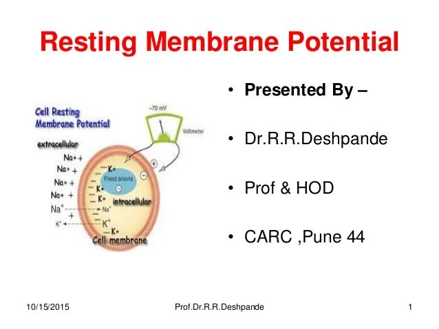 Resting membrane potential -- By Prof.Dr.R.R.Deshpande