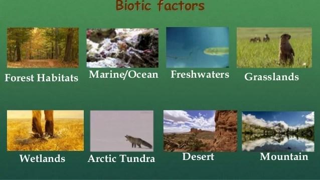 Tundra Biotic Or Abiotic