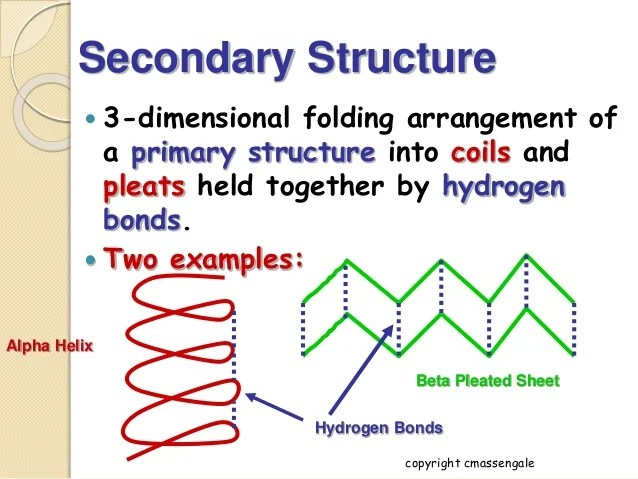 Structure Secondary Tertiary Primary Quaternary Functions And
