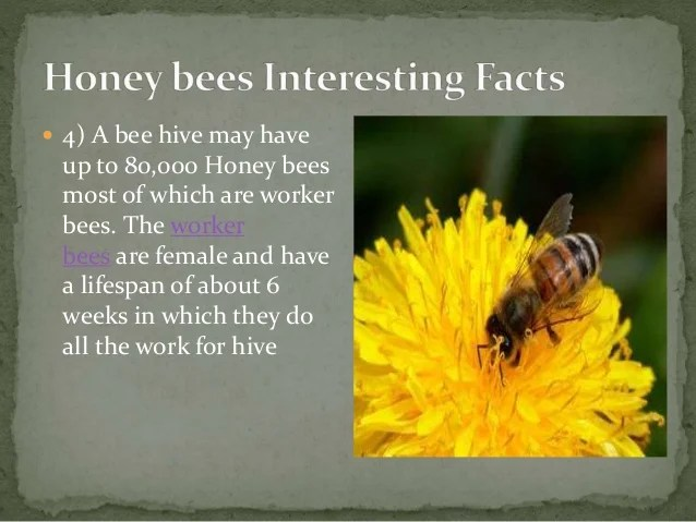 23.Some interesting facts about honey bees A Lecture By Mr ...
