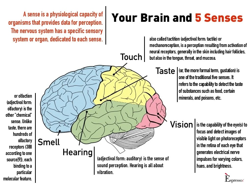 5 Senses Worksheet Mindfulness