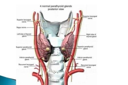 Interior Inferior Parathyroid Gland Full Hd Maps Locations
