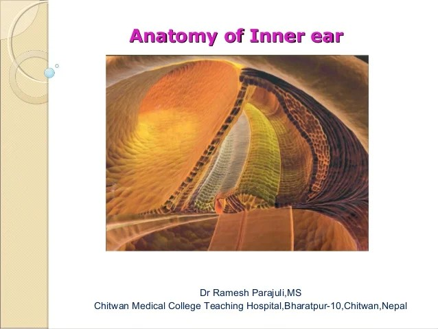 Anatomy of inner ear