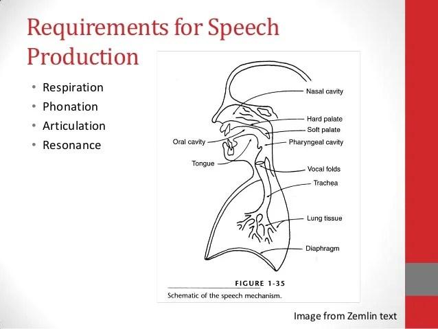 Anatomy of speech production