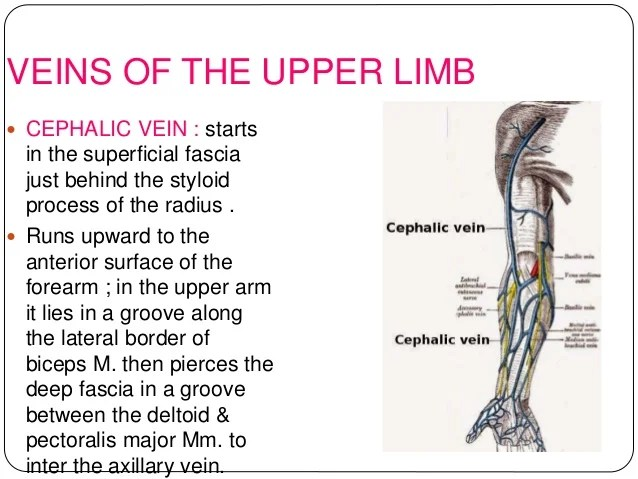 Injections Into Upper Arm Vein