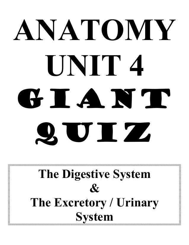 Anatomy unit 4 digestive and excretory systems big quiz ...