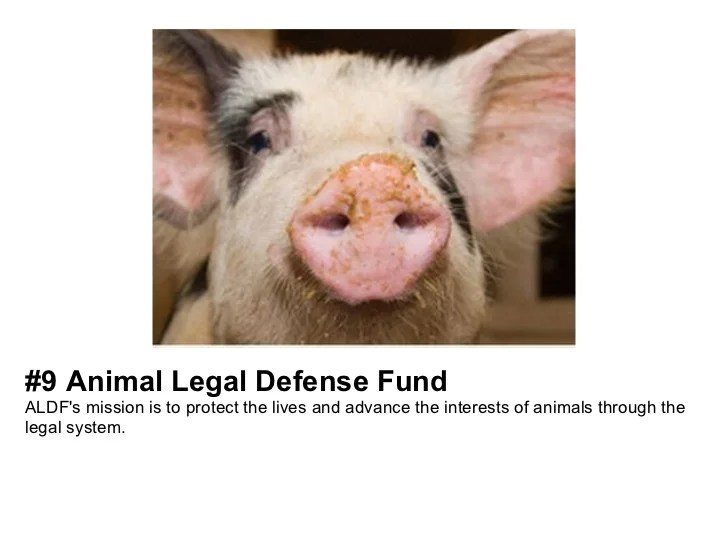 Top Animal Welfare, Rights & Protection Nonprofits