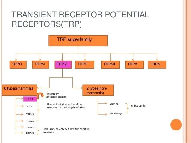 ppt on vanilloid receptors