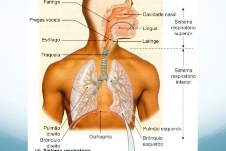imagens do sistema respiratorio » Full HD MAPS Locations - Another ...