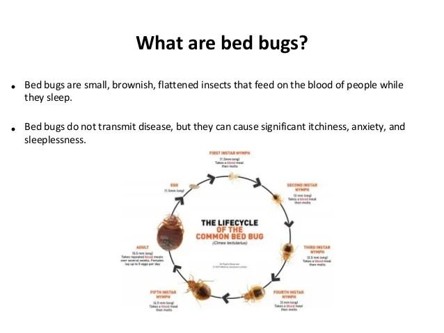 Bed Bugs In Schools