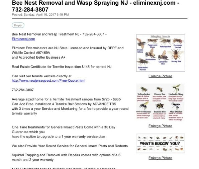 Bee Nest Removal And Wasp Spraying Nj Eliminexnj Com