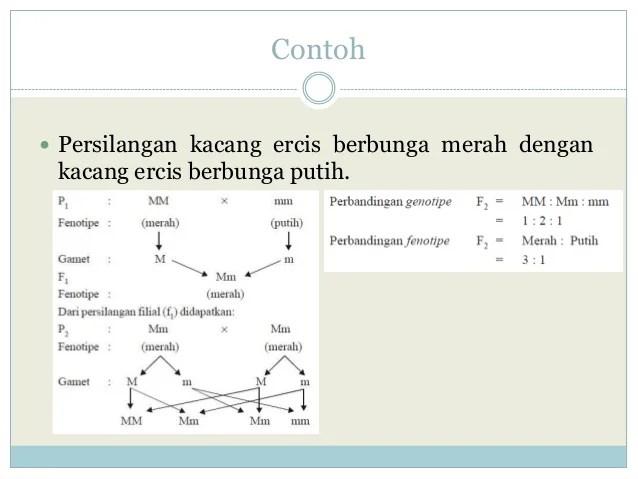 Informasi umumkelompok penelitian keahlian genetika dan bioteknologi molekuler. Biologi - Persilangan Monohibrid