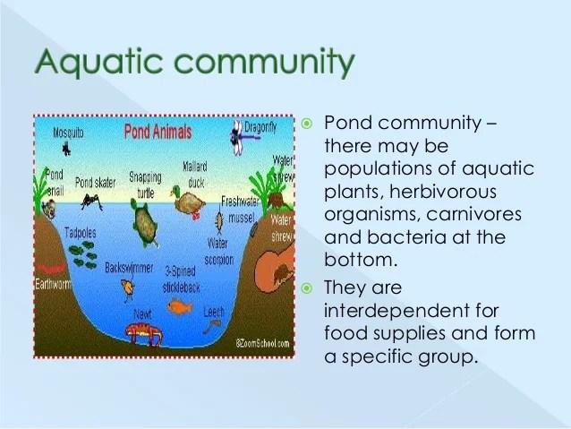 All Aquatic Plants