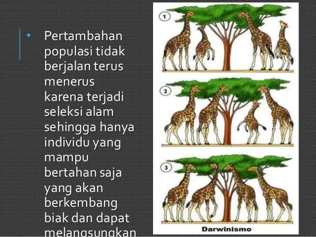 Menurut teori evolusi, makhluk hidup yang sekarang berbeda dengan makhluk hidup jaman dahulu.nenek moyang makhluk hidup sekarang yang bentuk dan strukturnya (mungkin) berbeda … Biologi evolusi