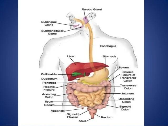 Bs ed,gen sc,human digestive system.unit 13