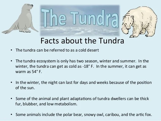 Tundra Ecosystem Animals