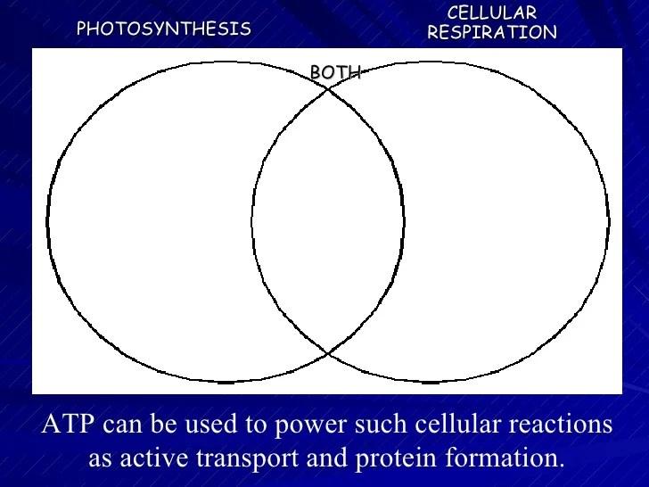 Comparing Photosynthesis And Respiration Venn Diagram