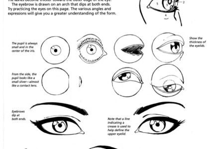 anatomy books for artists anatomy of eye anatomy of the eye anatomy ...