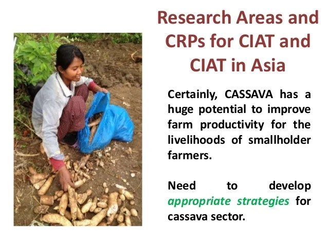 Research Areas and CRPs for CIAT Asia