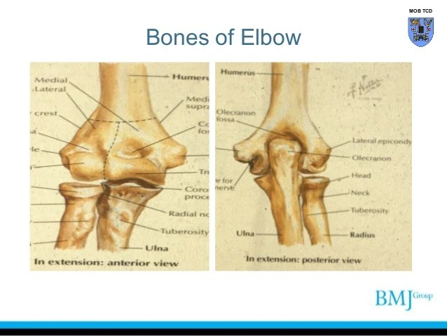 Clinical anatomy of the elbow