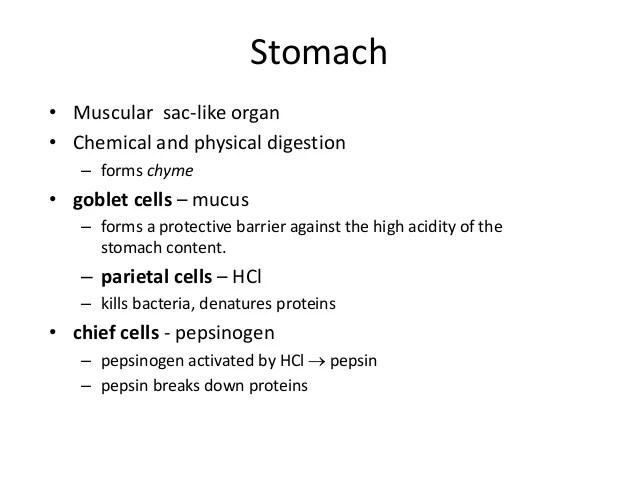 Comparative anatomy digestive system