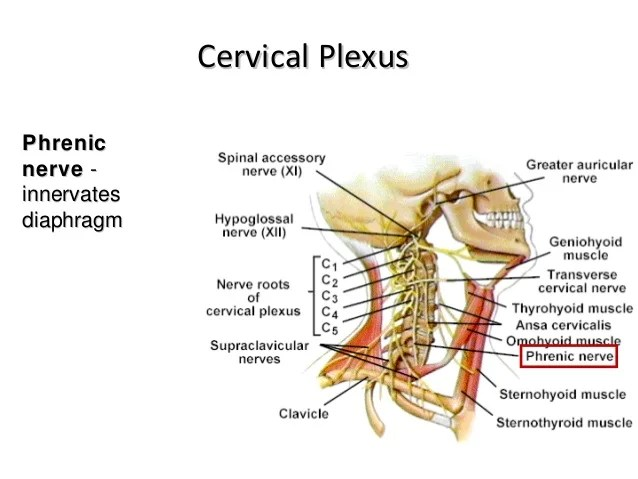 Nerve Median Pathway Spine