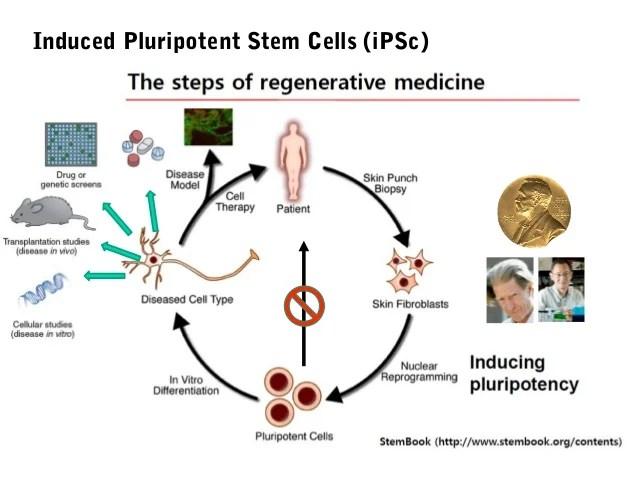 Screening of Endocrine Disrupting Chemicals using Stem Cells