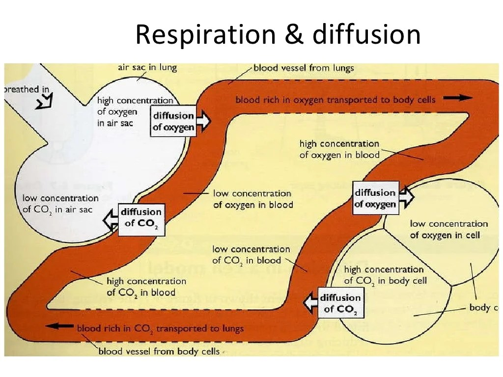 Diffusion And Osmosis Homework Powerpoint