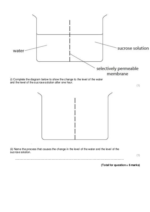 Diffusion, osmosis, and active transport practice questions