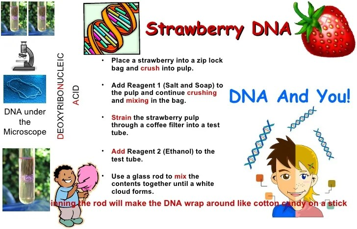 Dna From Strawberries