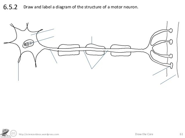 Annotated diagram of motor neuron newmotorspot http sciences wordpress com draw the core 616 5 2 ccuart Image collections