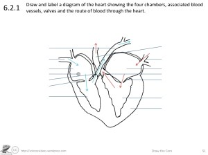 http:sciencevideoswordpress Draw the Core 51621