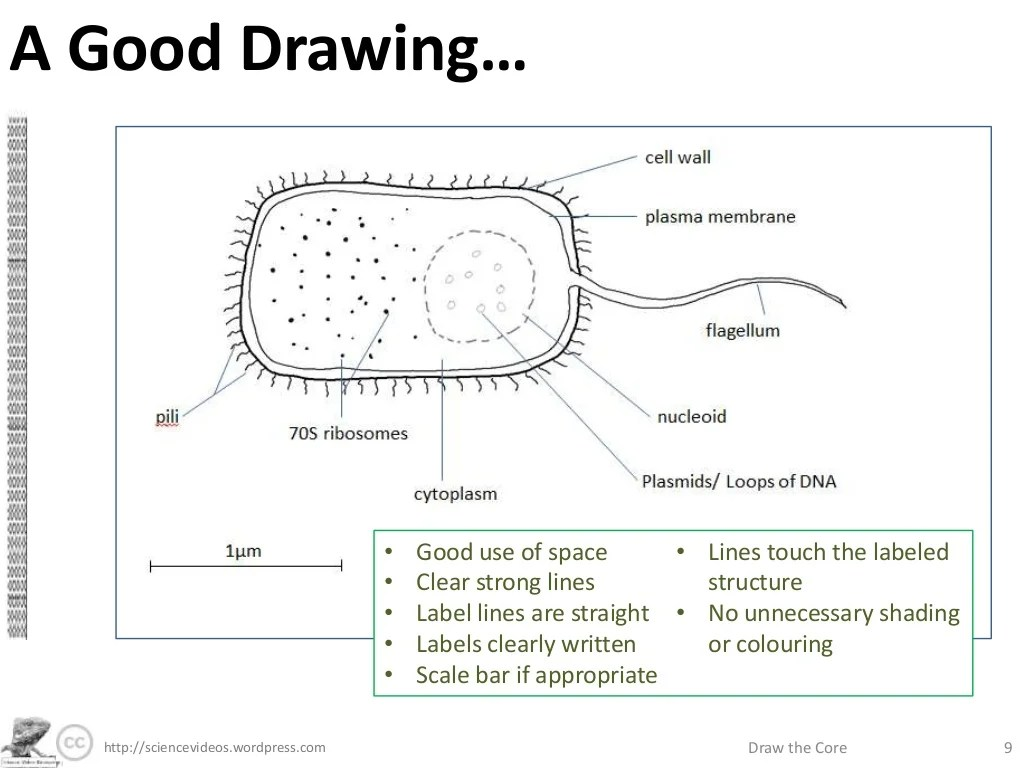 A Good Drawing Sciencevideos Wordpress Draw The