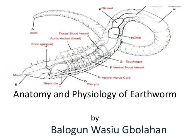 External Earthworm Labeled - Aflam-Neeeak