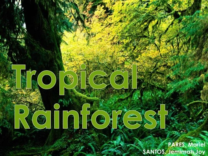 Two subspecies of tigers primarily live in a rainforest habitat: Ecology Tropical Rainforests