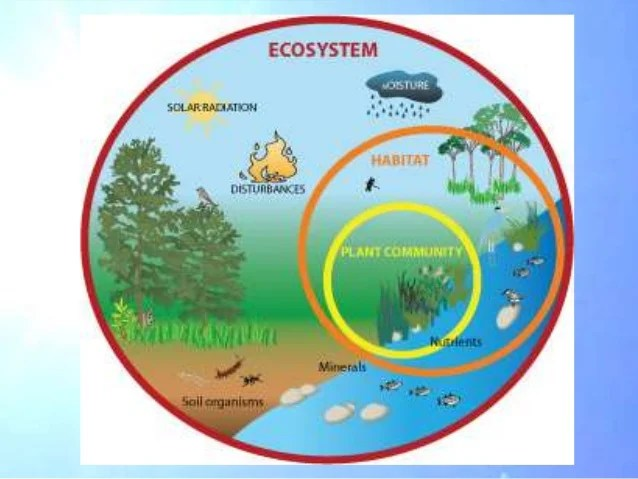 Freshwater Insects On Water